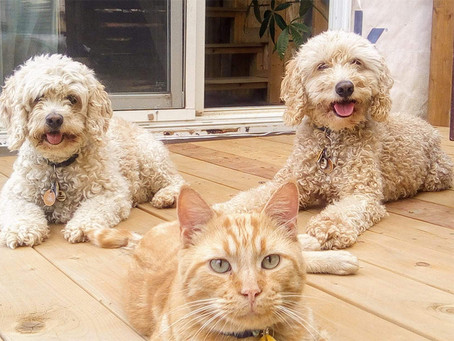 Celebrate the International Dog Day 2021!