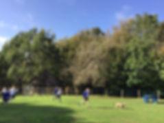 Marley field.jpg