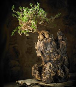 D146 Karst Off $120 tree