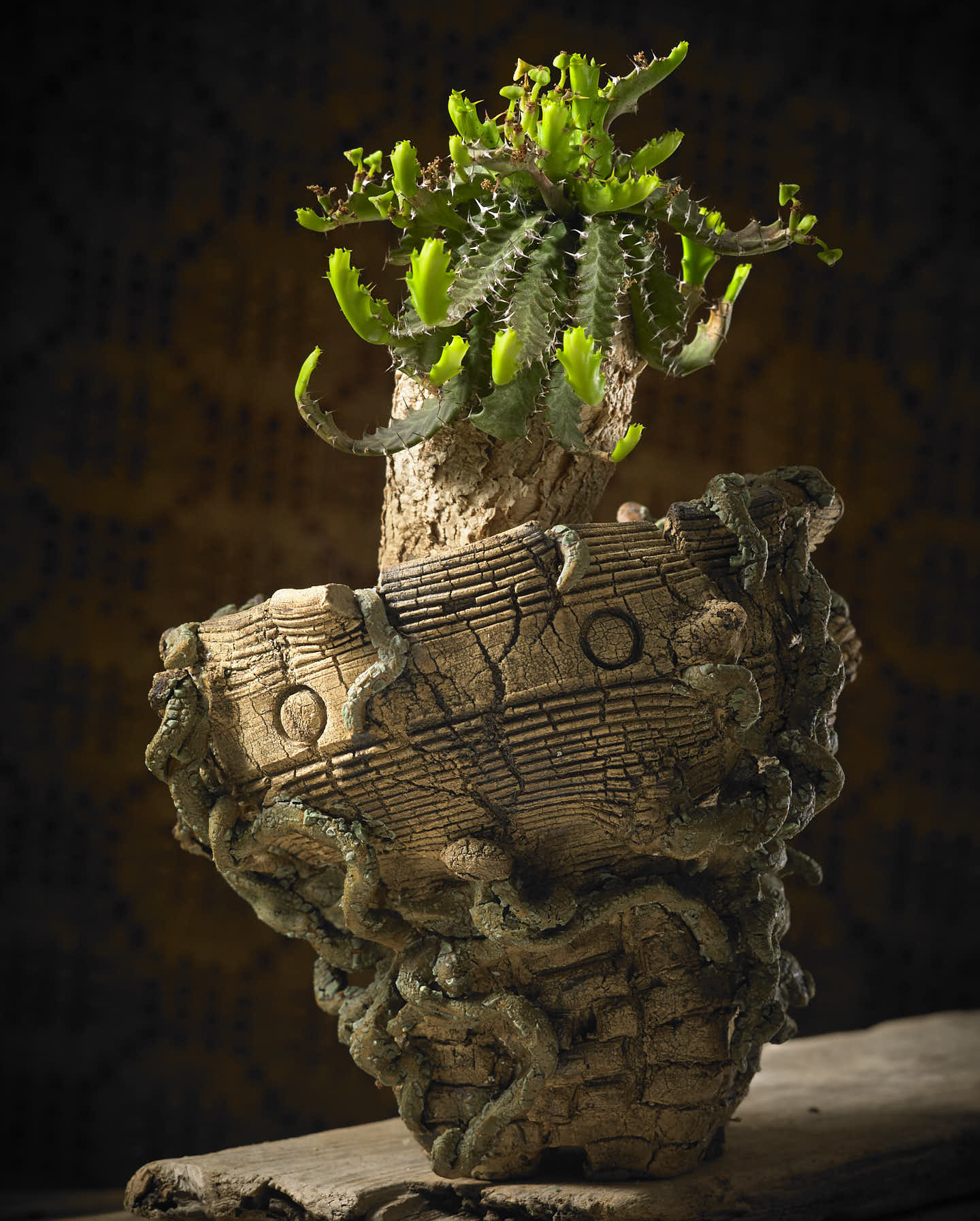 "Euphorbia Stellata in a ""temple"" pot"