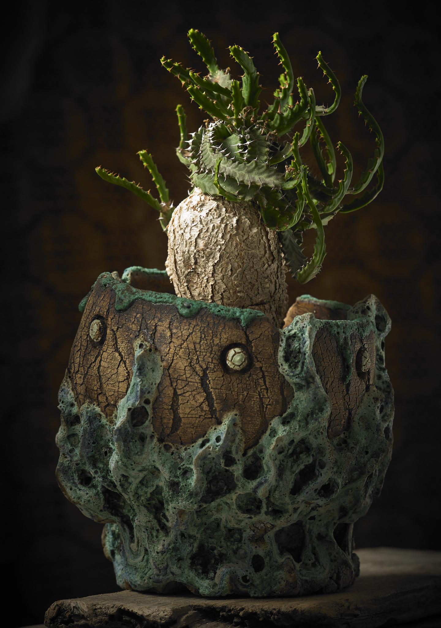 euphorbia stellata in opium daze 1