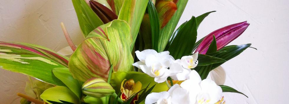 Tropical arrangement for sympathy