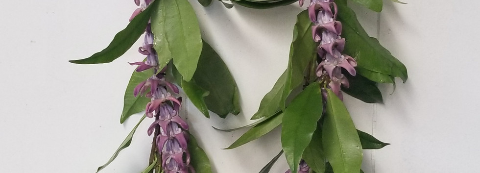 Maile lei with purple crown