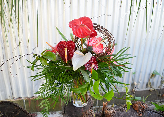Dozen Anthuriums3.jpg