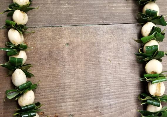 Kukui nut with foliage