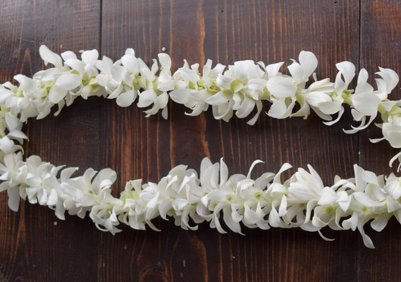 Full style white dendrobium orchid lei