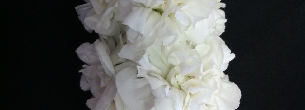 Ropestyle carnation lei