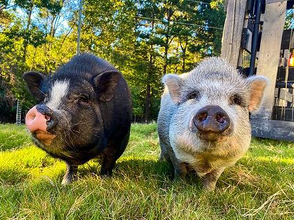 Wilbur and Charlotte.jpg