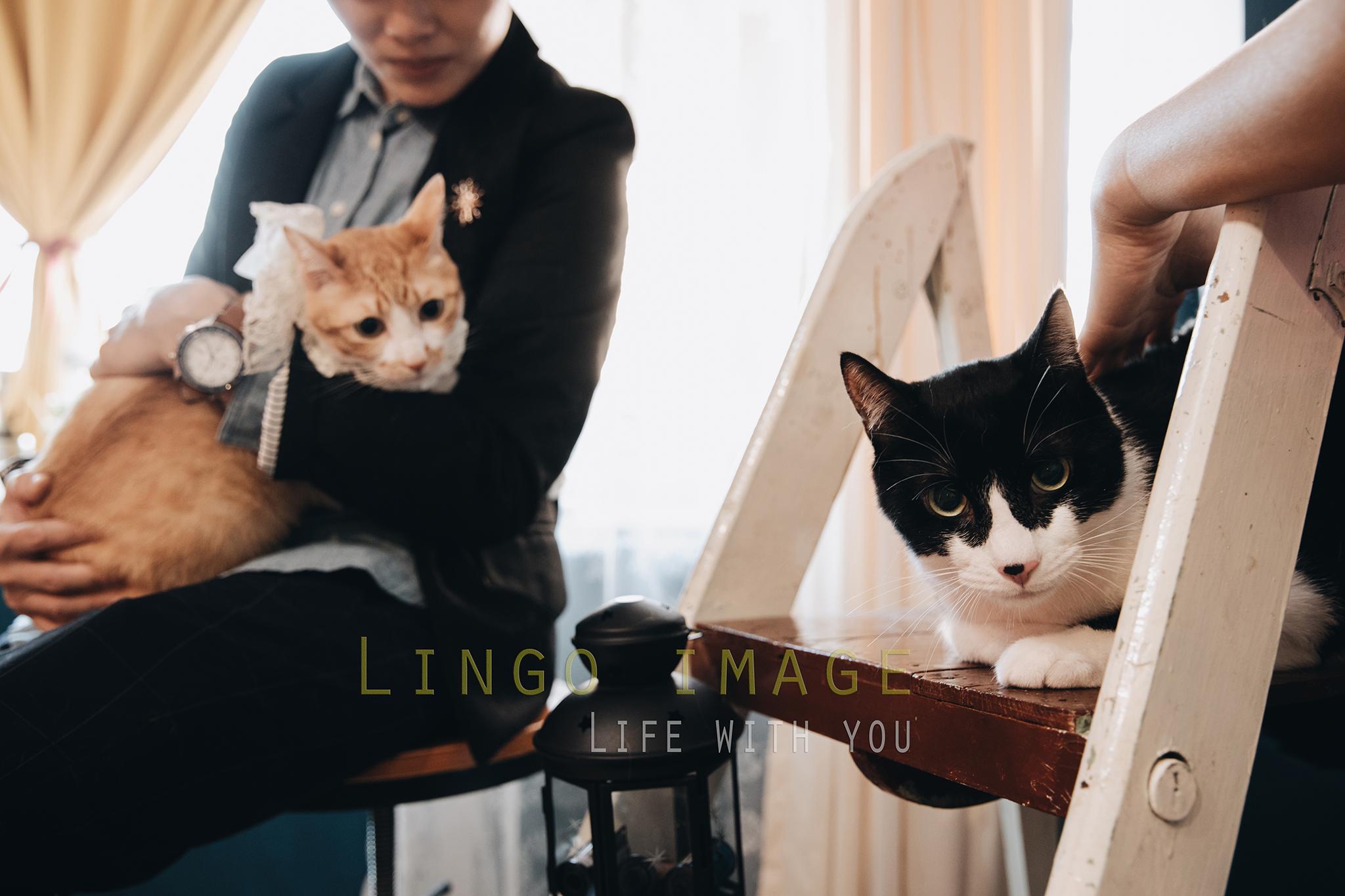 Lingo image_寵物8