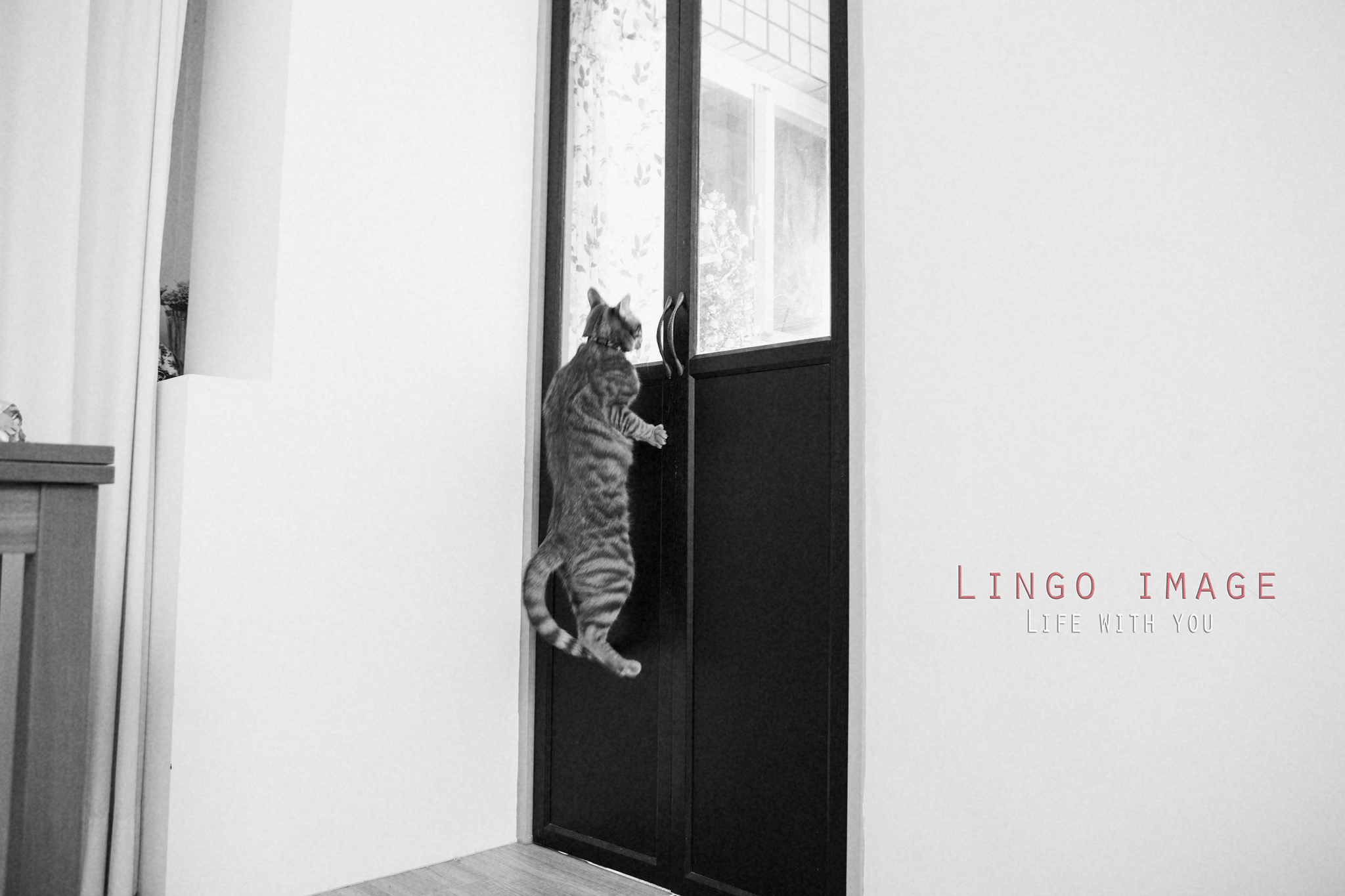 Lingo image_寵物82