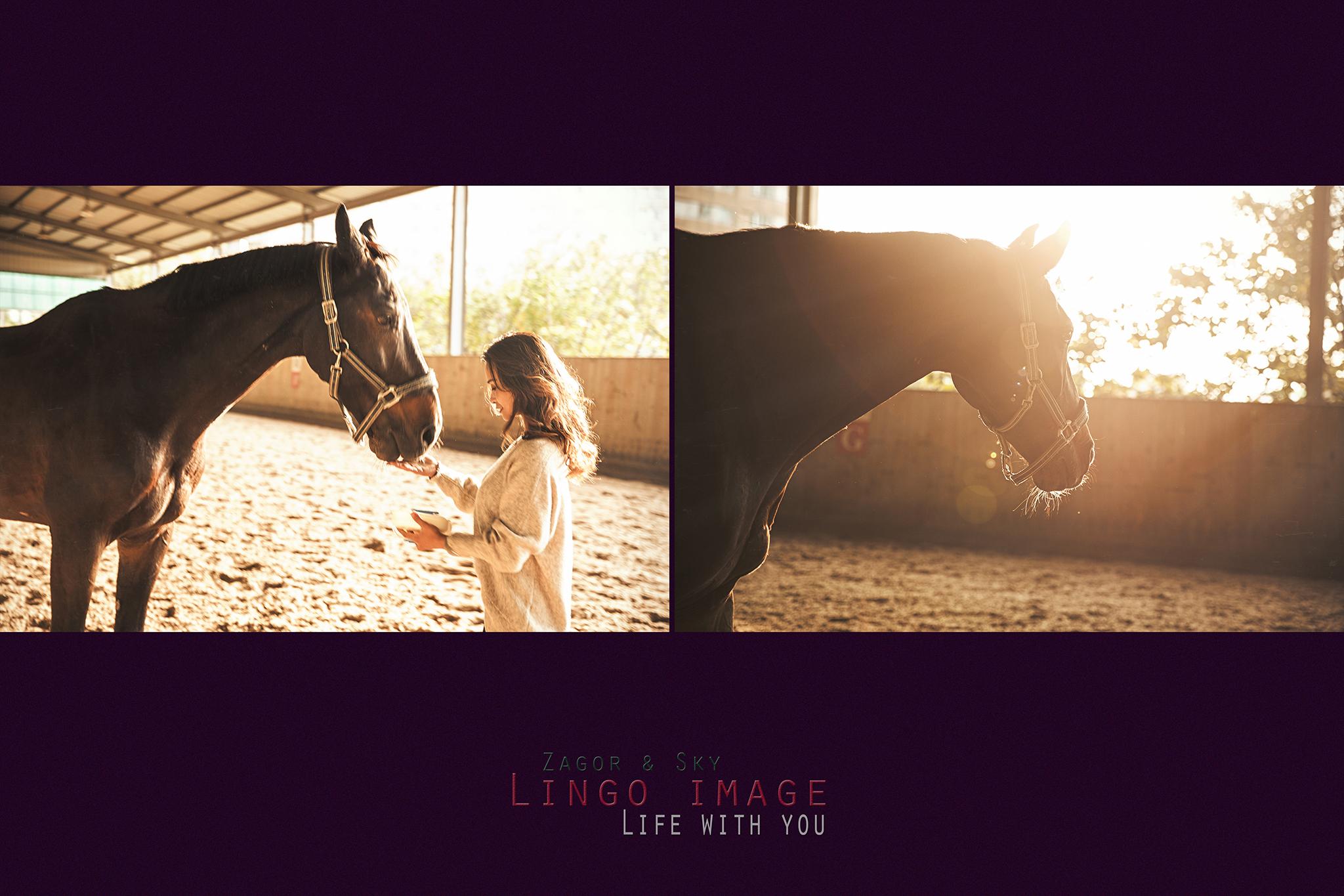 Lingo image_寵物50