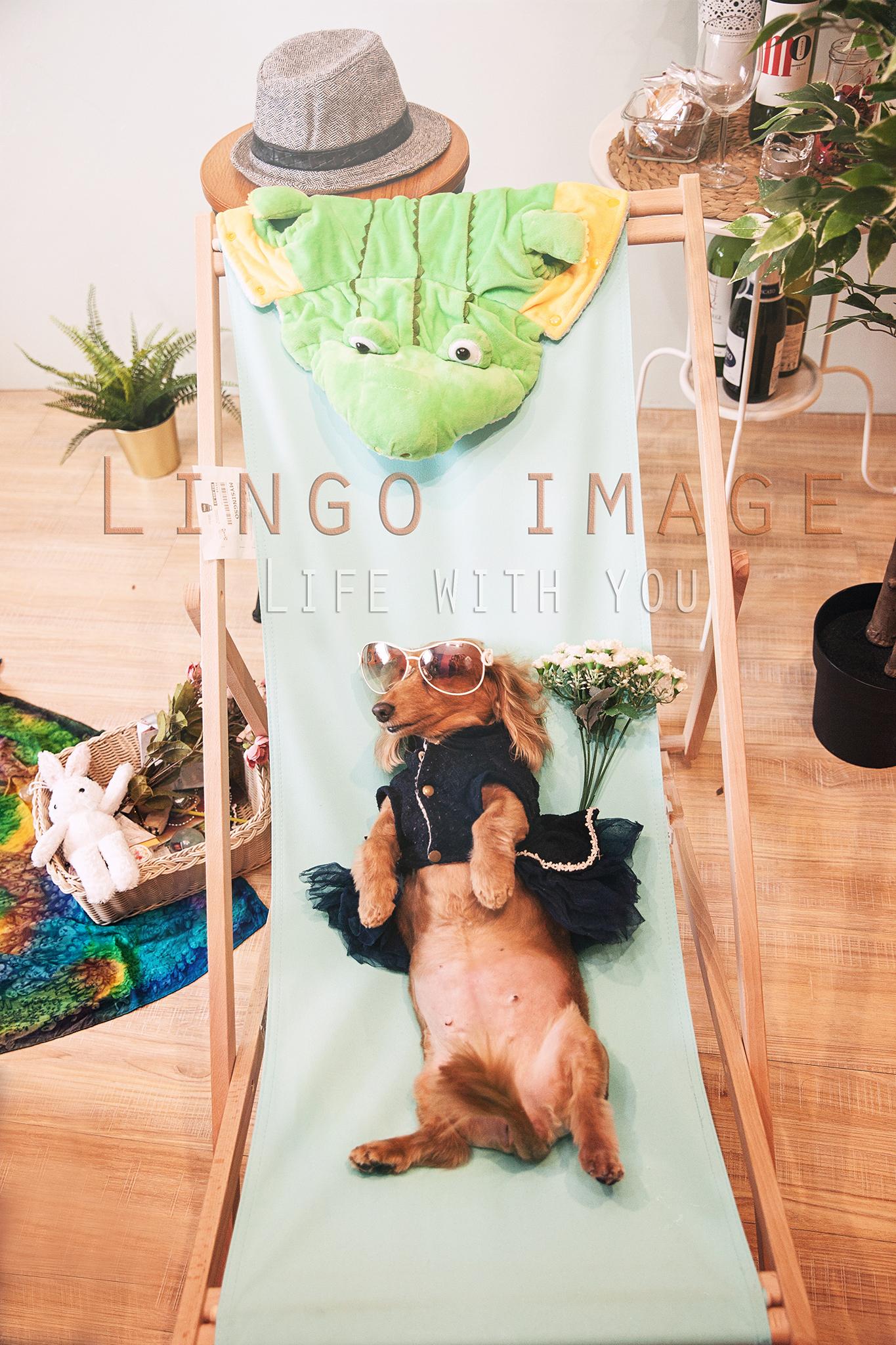 Lingo image_寵物46