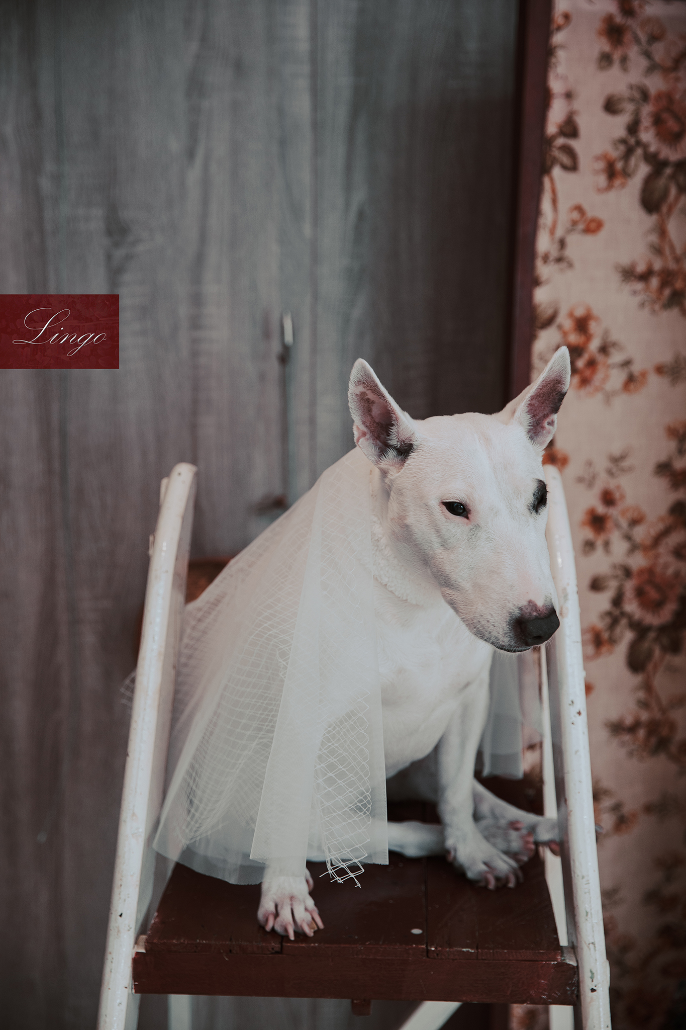 Lingo image_寵物95