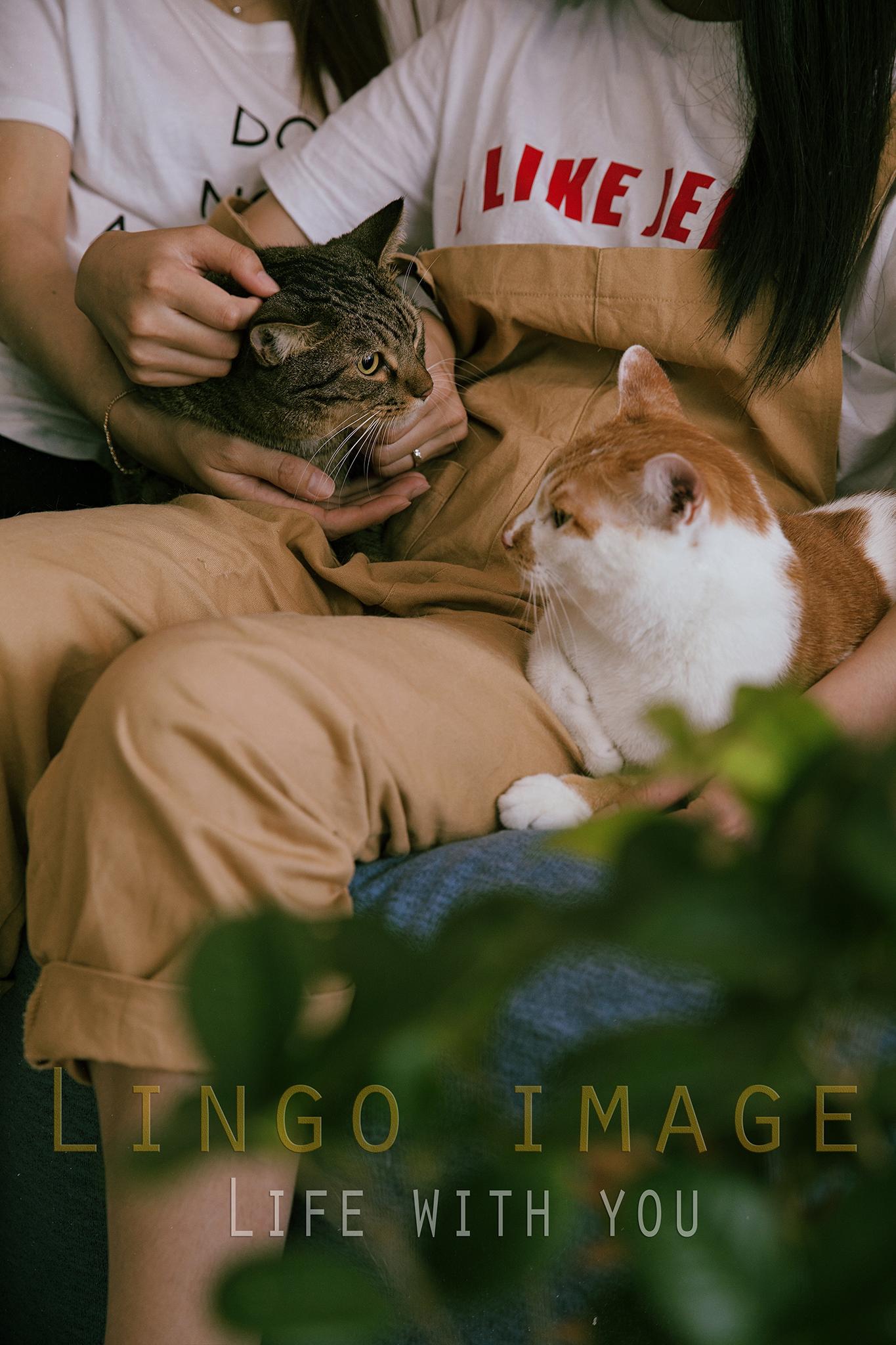 Lingo image_寵物70