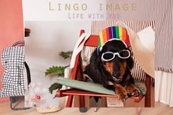 Lingo image_寵物65
