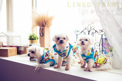 Lingo image_寵物33