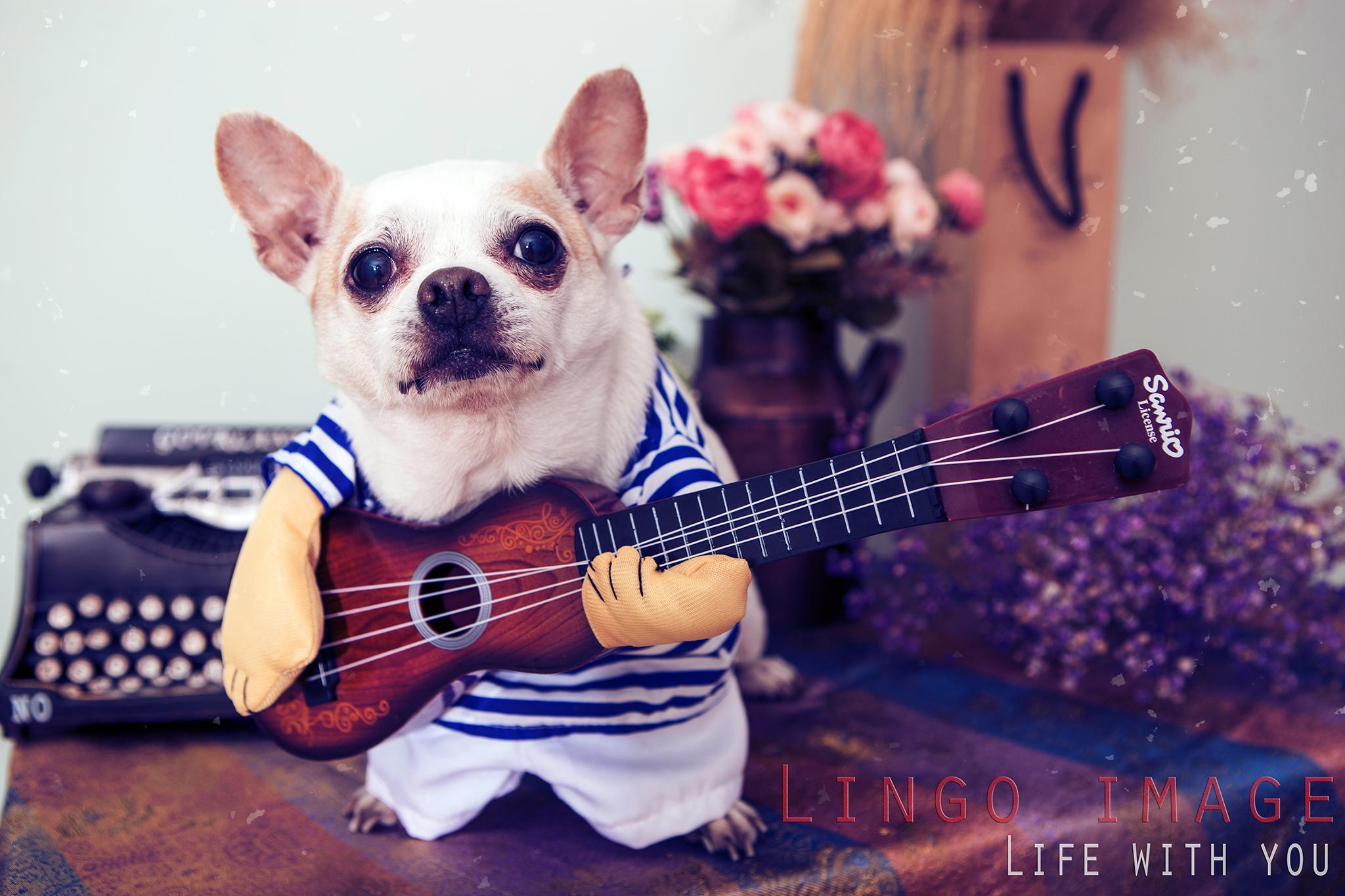 Lingo image_寵物19