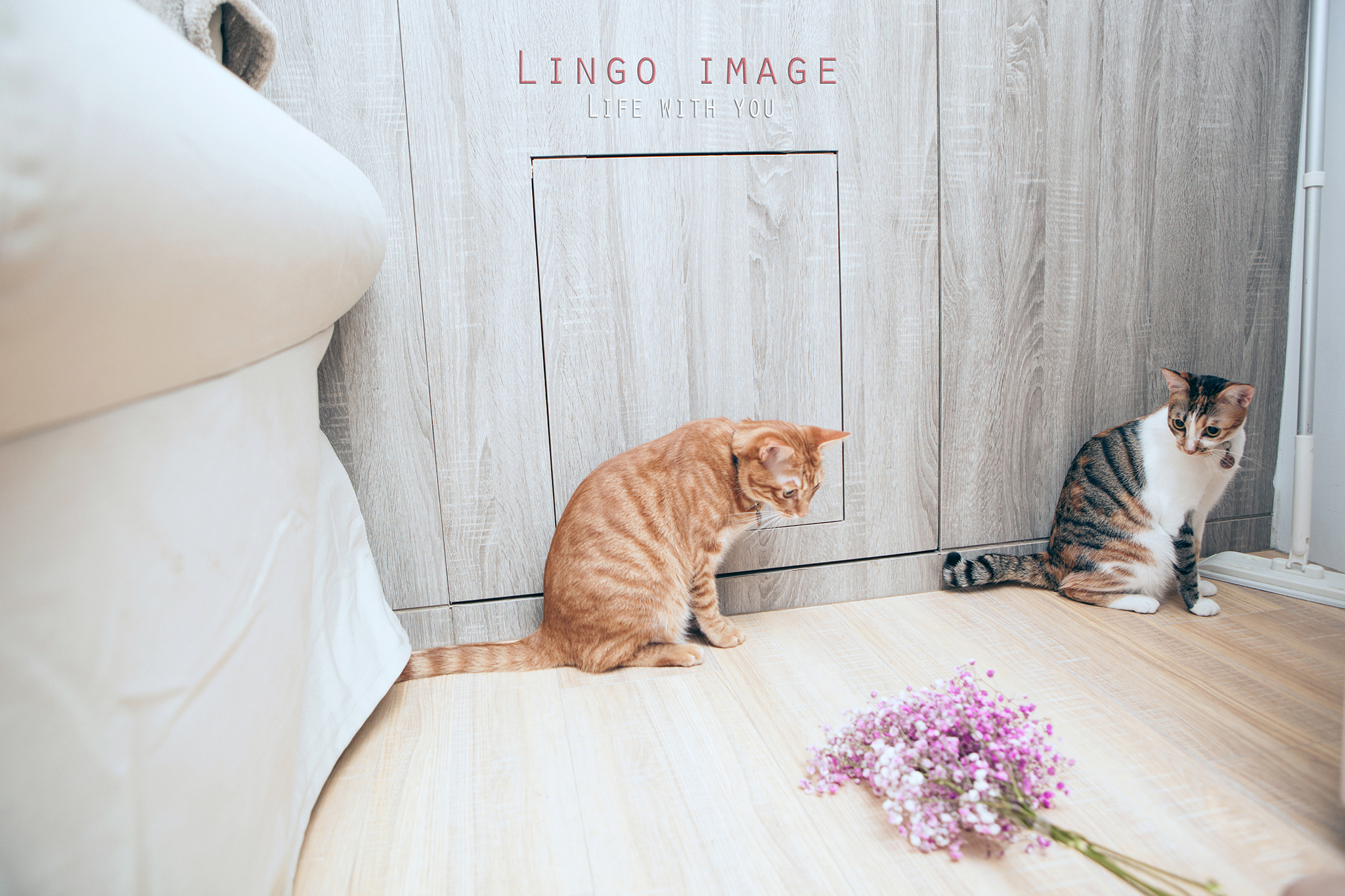 Lingo image_寵物78