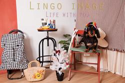 Lingo image_寵物66