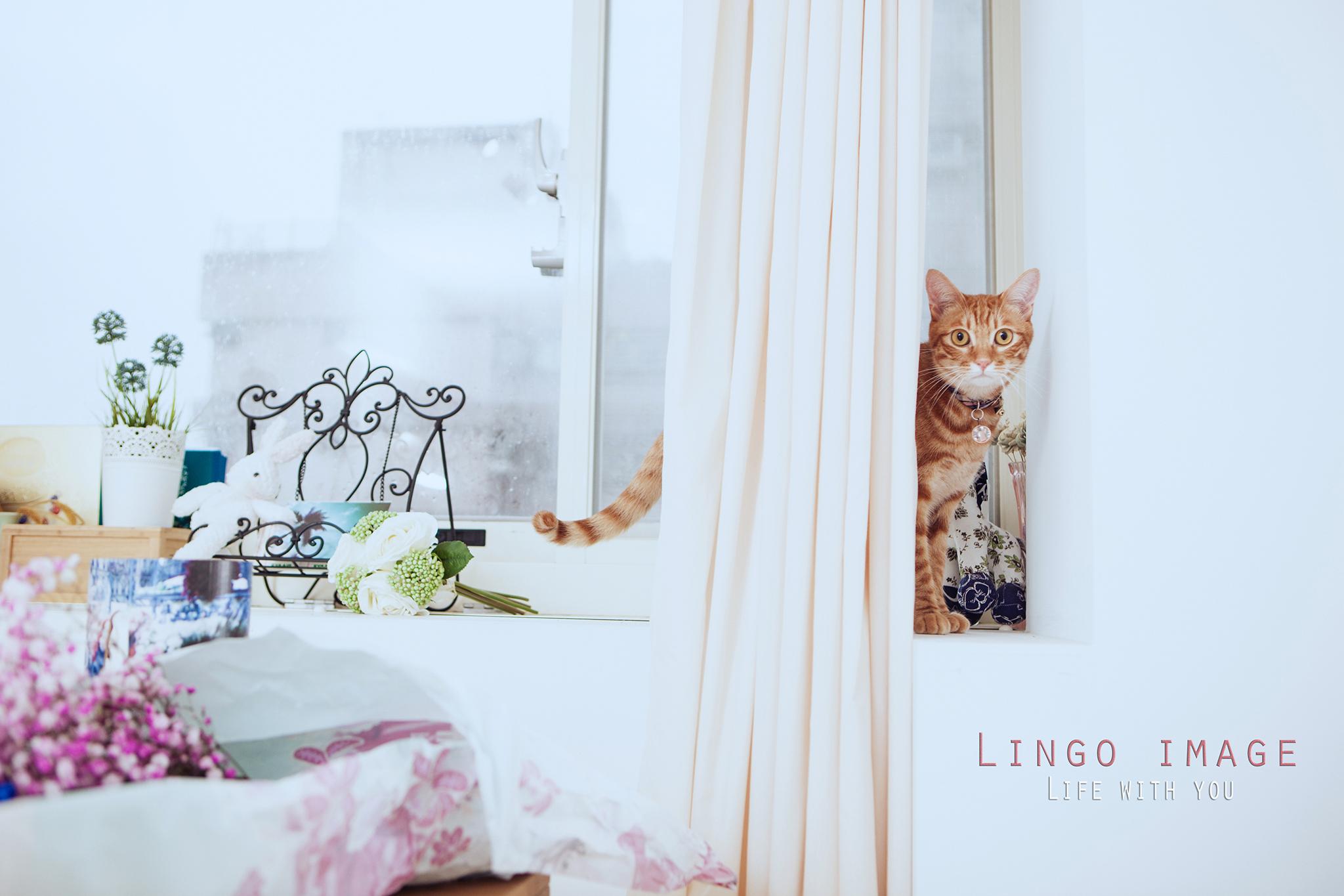 Lingo image_寵物79