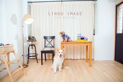 Lingo image_寵物75