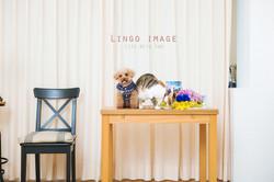 Lingo image_寵物76