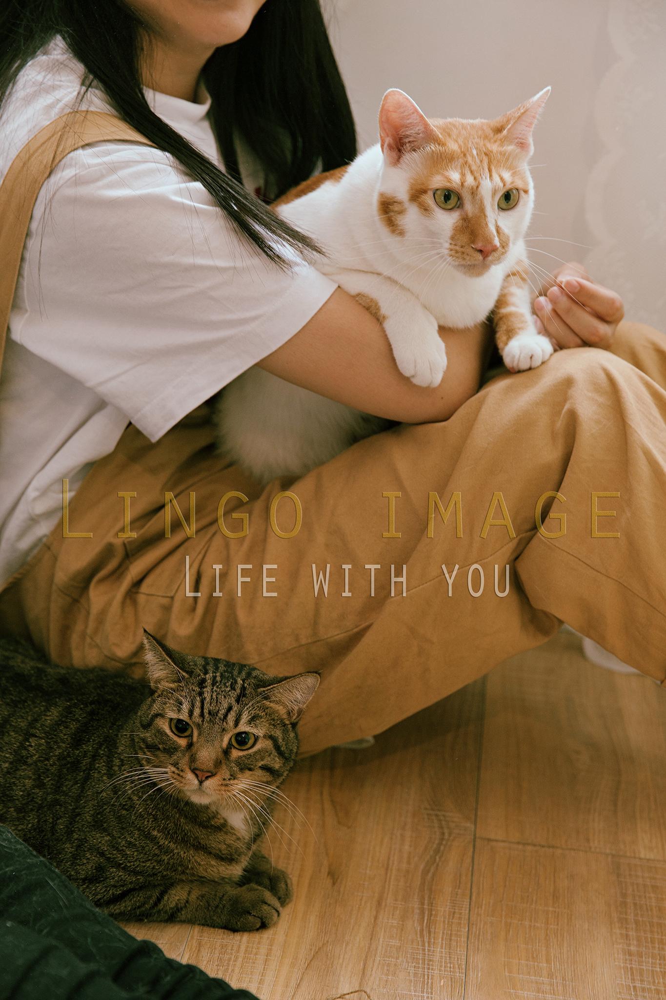 Lingo image_寵物74