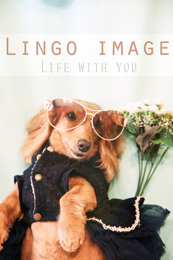 Lingo image_寵物47