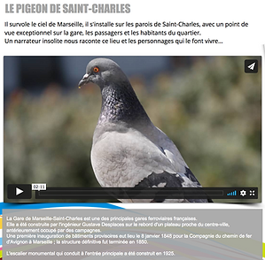 PIGEON ST CHARLES.png