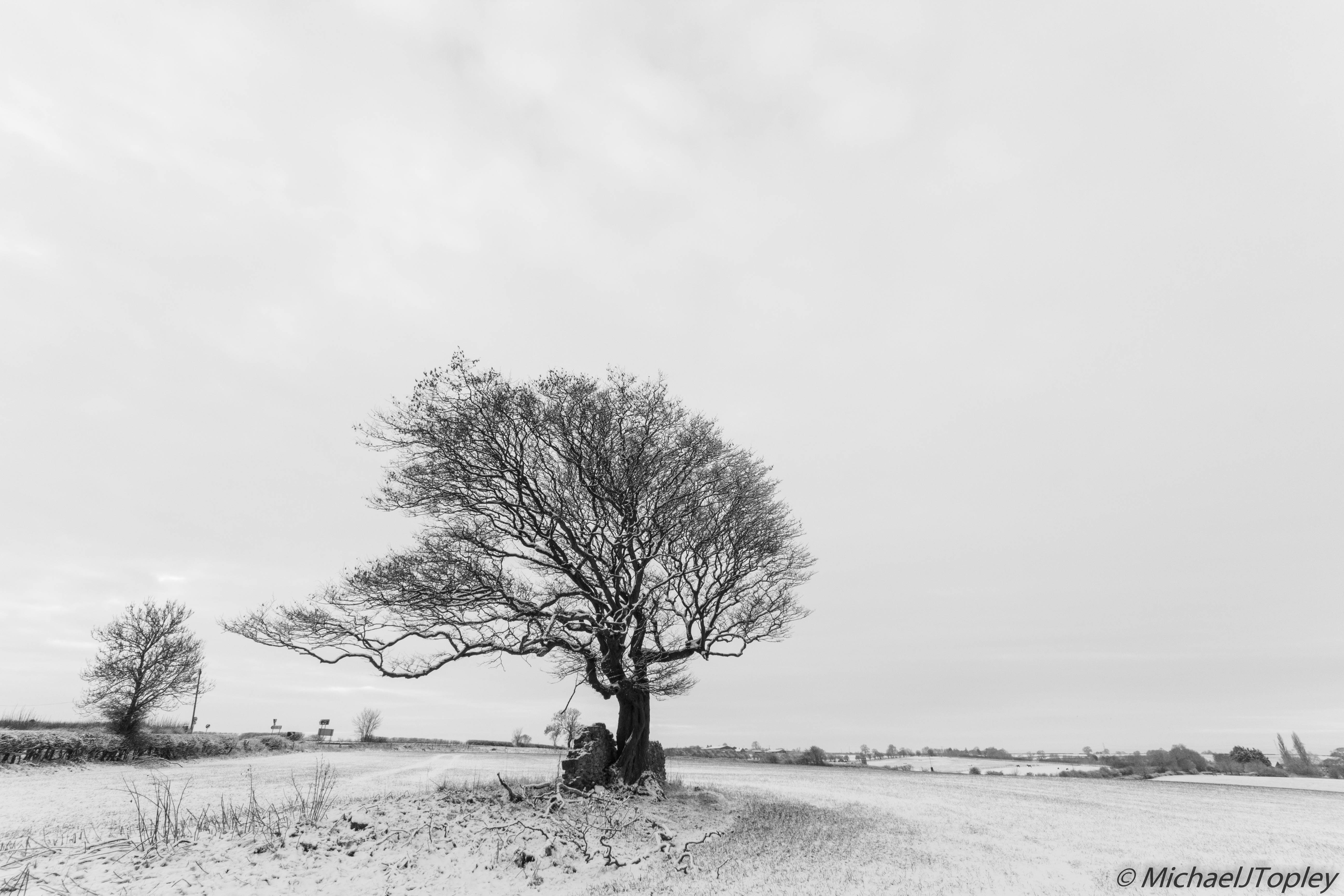 A Snowy Leicestershire
