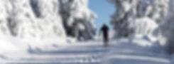 solo skier.jpg
