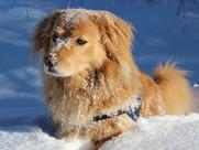 dog-snow.jpg