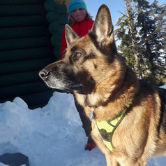 Winterfest 2019-skijorClinic- byMollyWis