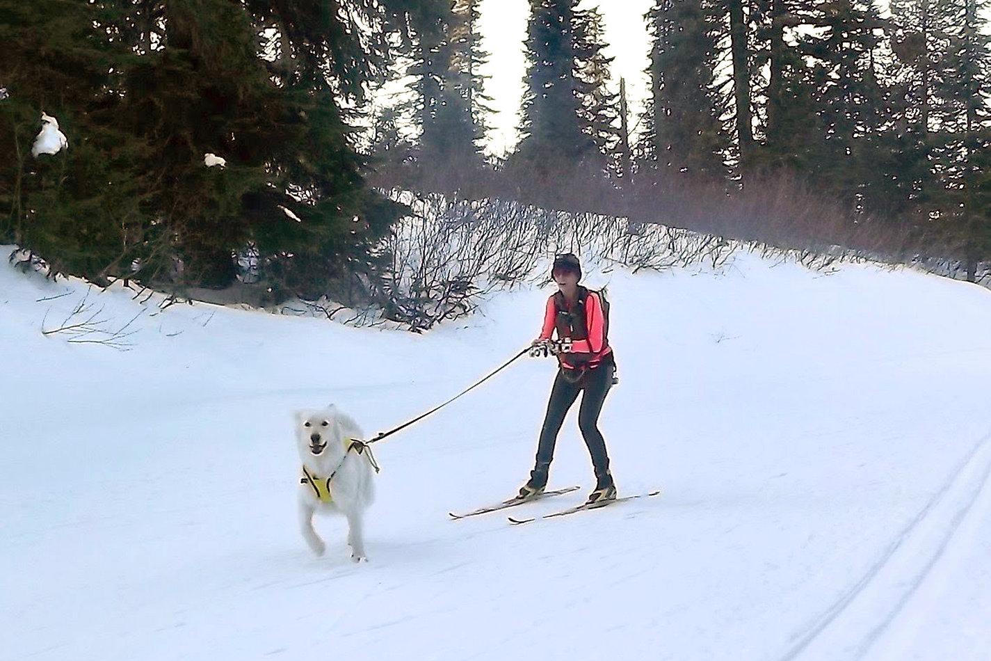 Winterfest 2019-skijorClinic- byMollyWisor 05.jpg
