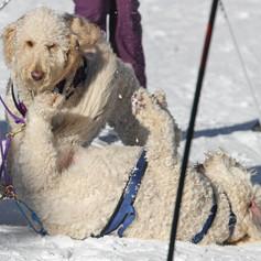 BarkerBeiner2019-Marsha Snow 49.jpg