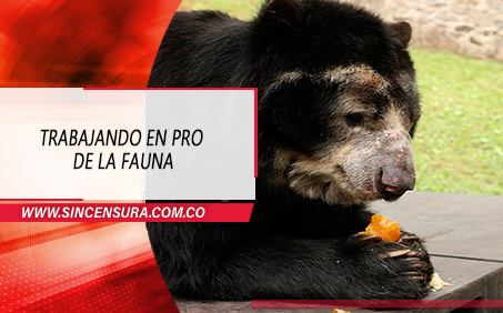 79 toneladas de alimentos para la fauna en Cundinamarca