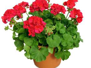 50+ maar nog niet achter de geraniums...