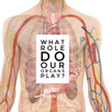 What Role Do Our Organs Play?