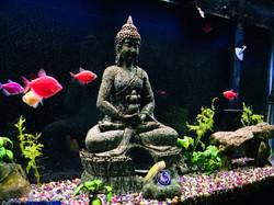 Fish & Buddha