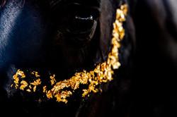 Goldschimmer