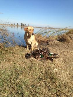 otis+duck+hunting+2