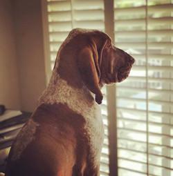 moe looking out window