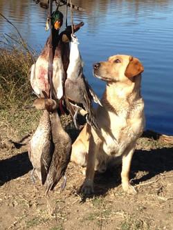 otis+duck+hunting