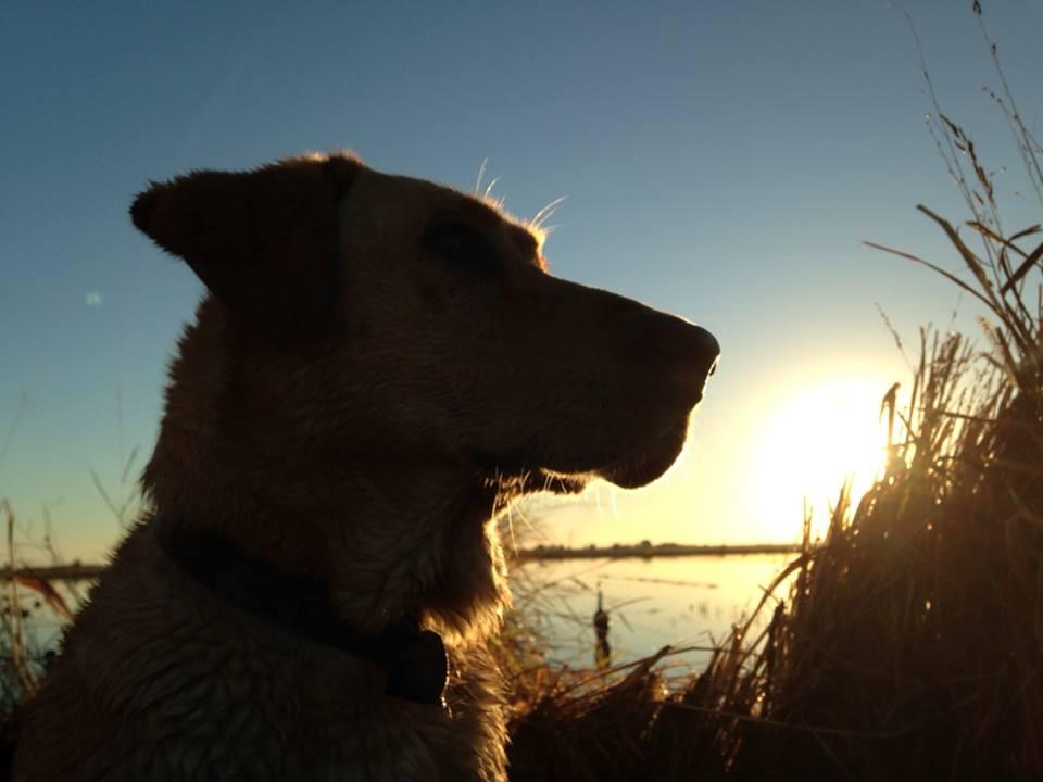 otis+duck+hunting+3