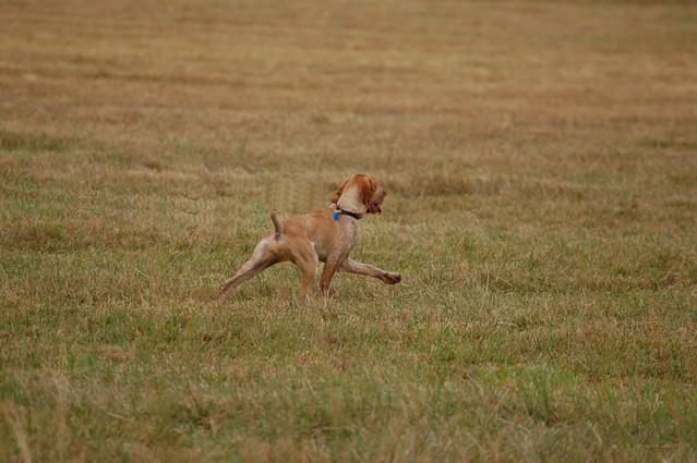 Ellie+hunting+10.3.2011+5.jpg