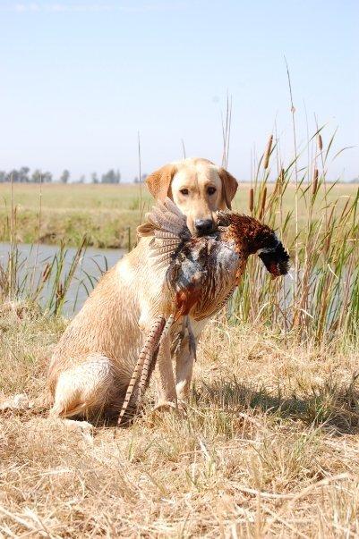 otis+and+pheasant+profile