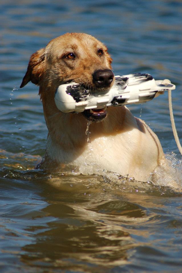 otis+swimming