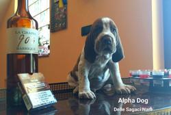 alpha dog tonka