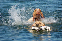 ellie+and+otis+swimming+2
