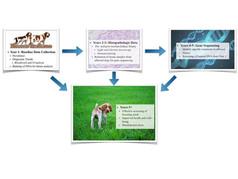 Kidney disease 1.jpg